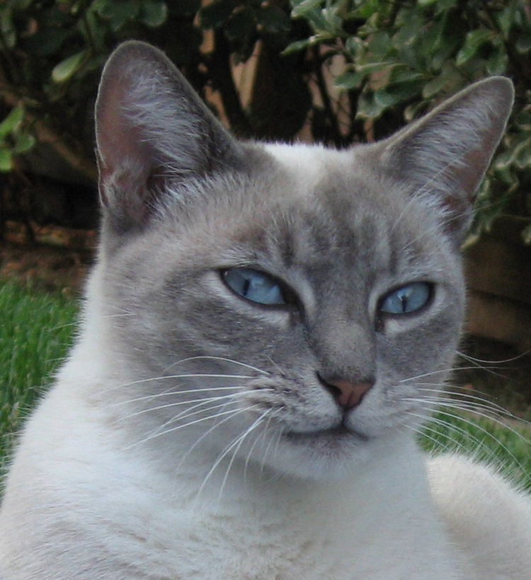 What's the Story with Feline Infectious Anemia? | Pet Doctor Mom