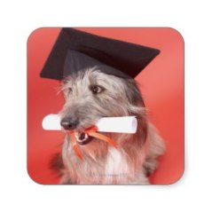 Dog mortarboard